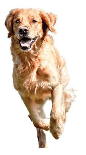 Ahuyenta perros ultrasonico portatil sw-01 plagasonix