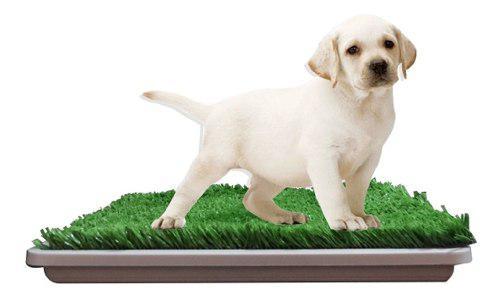 Bandeja sanitaria para mascotas con paño cachorros bulldog