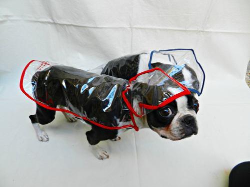 Capa de lluvia para perros. piloto para perros.