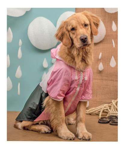 Piloto impermeable capa lluvia perro grande
