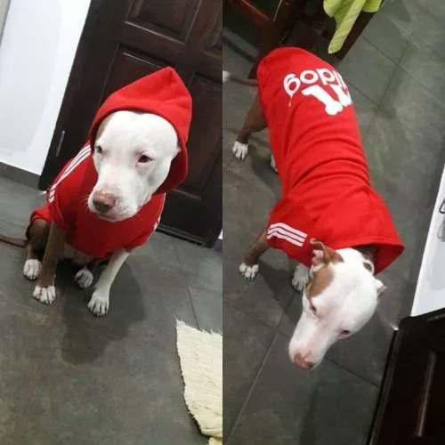 Ropa p/ perros grandes buzo c/capucha adi...dog talle: 7 xl