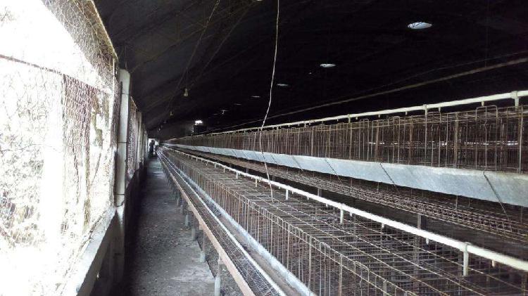 100 jaulas pons para gallinas ponedoras. usadas