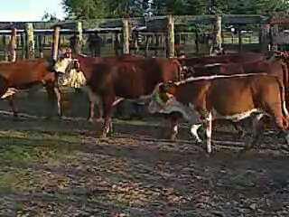 Vendo campo ganadero entre villa minetti y s.bernardo-