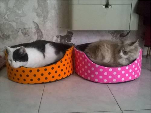 Moises colchon cuchas camitas para mascotas perros gatos t1