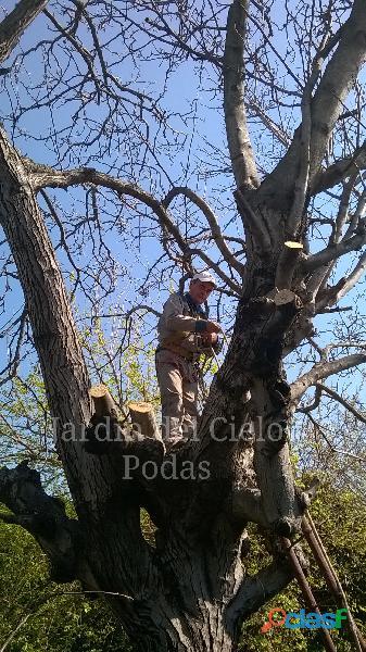 Poda de árboles en altura extracciones