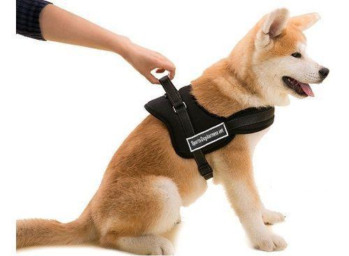 Arnés pechera acolchado reforzado para perros talle s