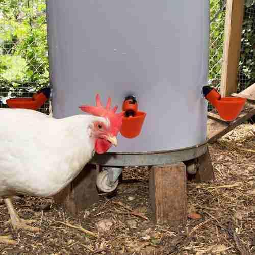 Bebedero automático copa con niple pack 15 unidades aves