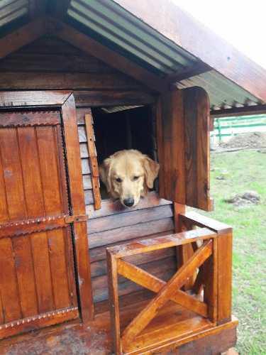 Cucha - casa para perro excelente calidad