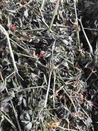 Heno de alfalfa. conejos cobayos chinchillas microcentro