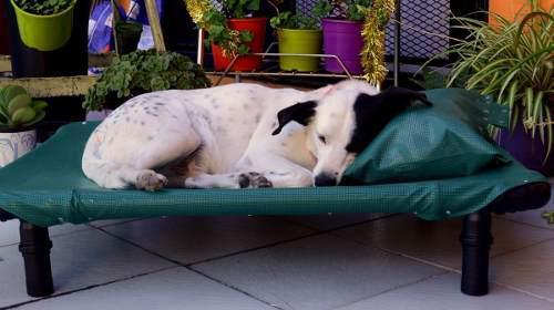 Cama para mascotas - mediana
