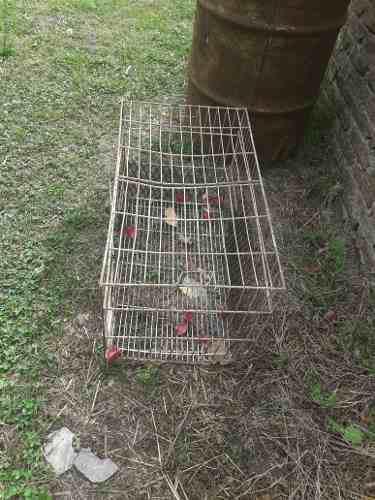 Jaula para perros gatos conejos