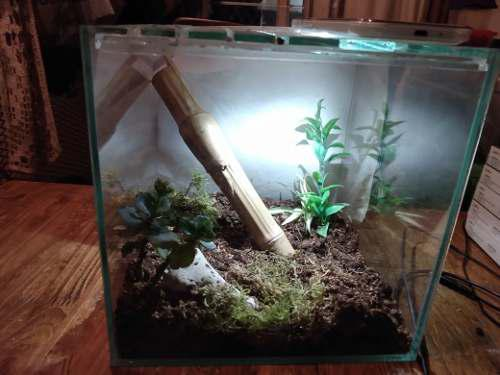 Terrario/pecera cubo con tapa mosquitero (sin deco) reptiler