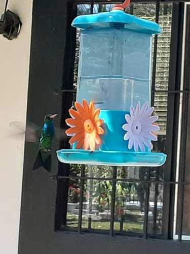 Bebedero para colibrí picaflor 4 flores