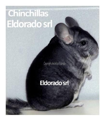 Chinchillas eldorado, 56 años, 86 grandes camp de la rural