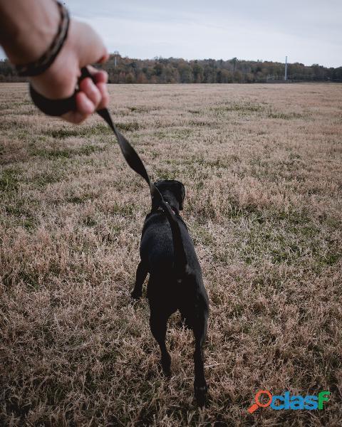 Paseador de perros en Villa Elisa y City Bell La plata