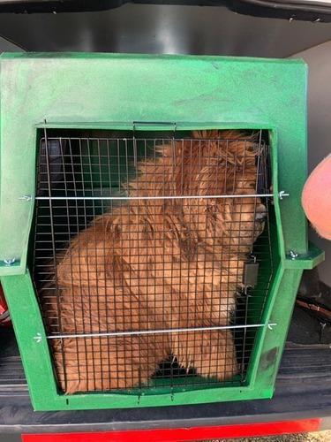 Canil transporte jaula perro gigante 122 largox90 ancho x96