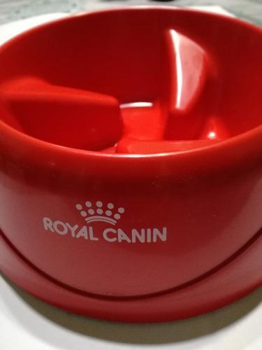 Royal canin plato come lento comedero para perro glotones