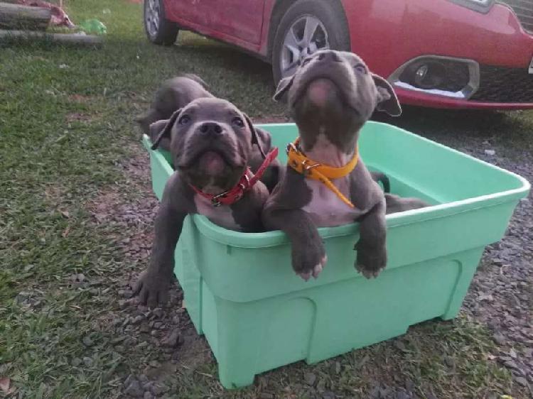 Excelentes cachorros disponibles