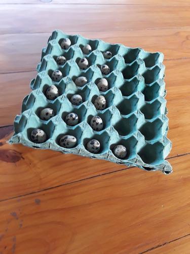 Huevos de codorniz para consumo, precio por docena