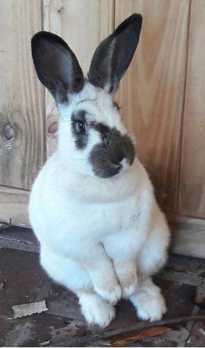 Conejo, envío a domicilio, jaula, alimento, biruta
