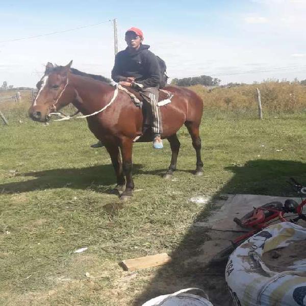 Vendo lote de caballos criollos