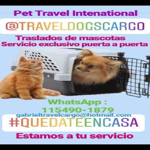 """Travel dogs cargo """" traslados de mascotas a todo el país"""