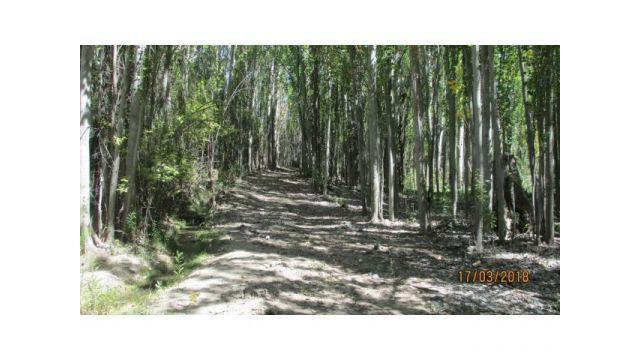 Terreno de 4,2 hectareas próximo a villa las vegas