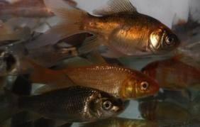 Combo de 10 peces grandes 12 cm surtidos