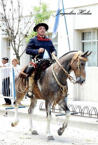 Vendo caballo overo