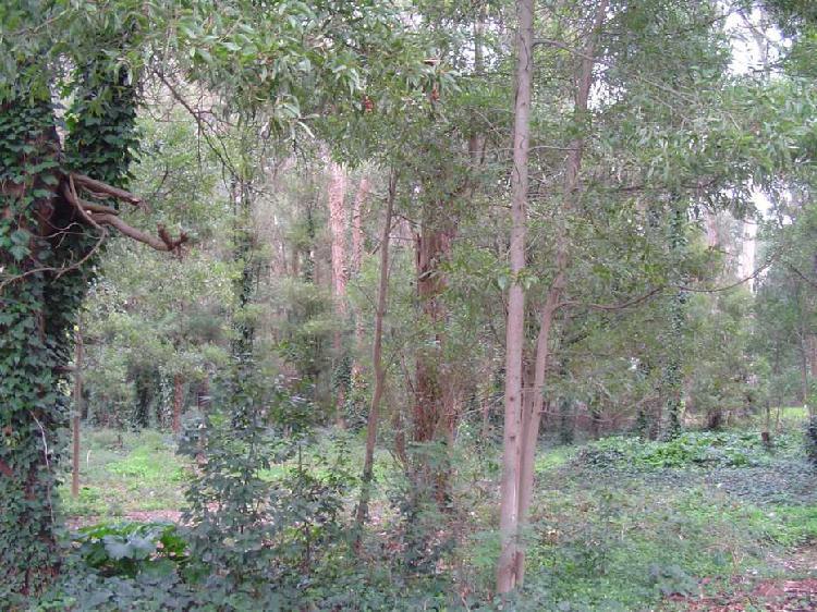 Lote zona bosque peralta ramos