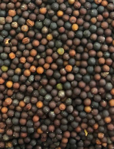 Colza semilla para aves 1 kg canarios jilgueros pajaros