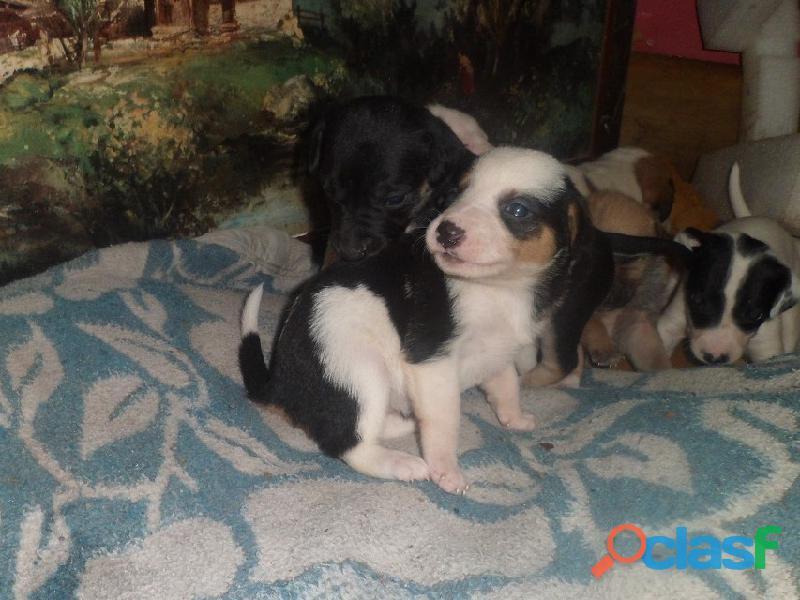 Adoptar perritos en Pereyra, El Pato, Seguí, Villa Elisa City Bell, Gorina, Gonnet, Hernández 1