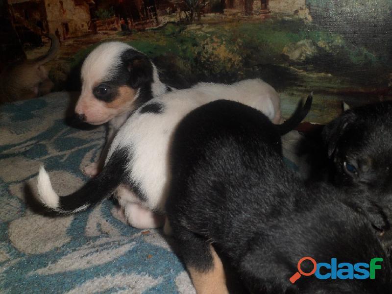 Adoptar perritos en Pereyra, El Pato, Seguí, Villa Elisa City Bell, Gorina, Gonnet, Hernández 2