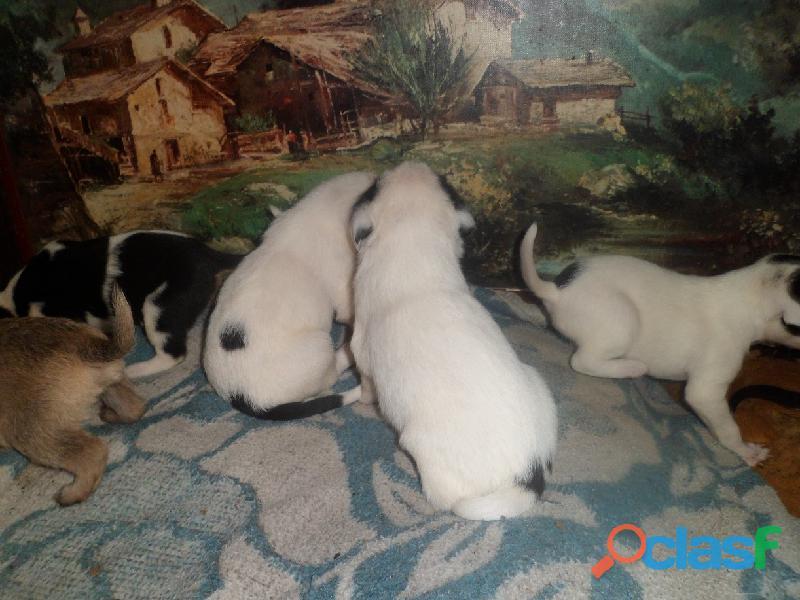 Adoptar perritos en Pereyra, El Pato, Seguí, Villa Elisa City Bell, Gorina, Gonnet, Hernández 3