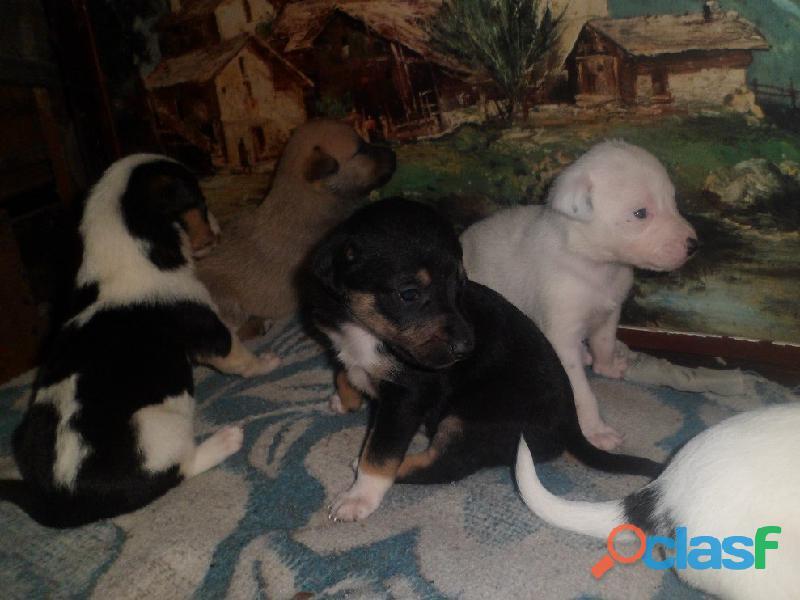 Adoptar perritos en Pereyra, El Pato, Seguí, Villa Elisa City Bell, Gorina, Gonnet, Hernández 5