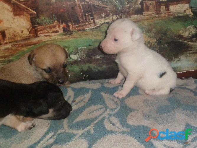 Adoptar perritos en Pereyra, El Pato, Seguí, Villa Elisa City Bell, Gorina, Gonnet, Hernández 6