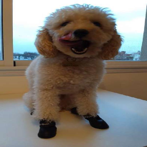 Botas de perro para lluvia
