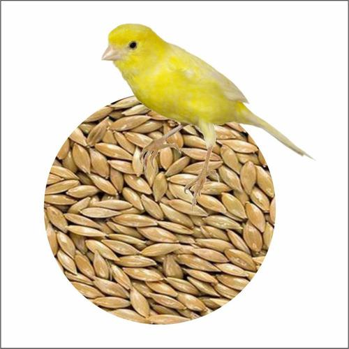 Alpiste semilla premuin canarios aves de jaula pajaros 3 kg