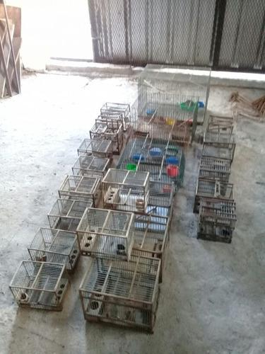 Lote 23 jaulas para pájaros