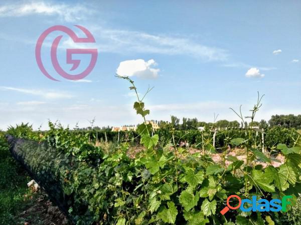 Greenwood vende viñedo / finca y tierras en el maravilloso valle de agrelo