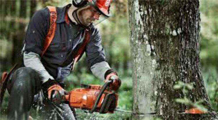 Poda y extracción de árboles con motosierra, palmeras,