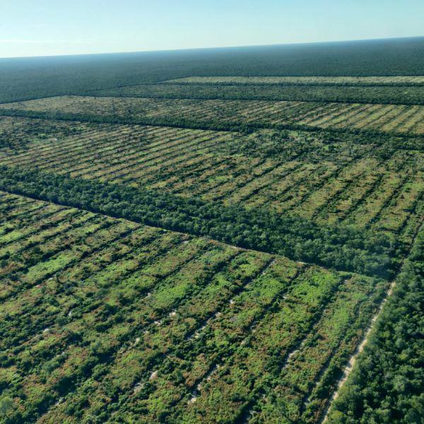 Campo agrícola-ganadero en agua dulce, alto paraguay