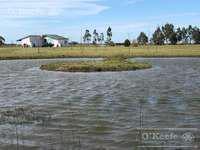Campo 450 has ganadero con 20% aptitud agrícola - a 3 km de