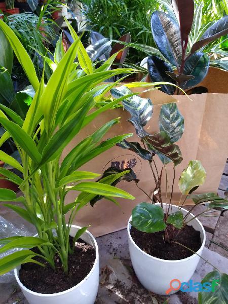 Envio de plantas a domicilio vivero online envios en el dia