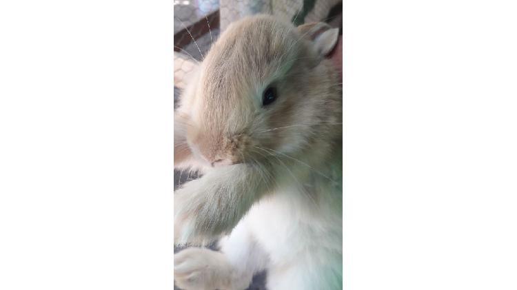 Hermosos conejos bebes