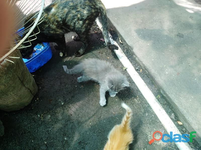 Regalo gatitos de 40 dias
