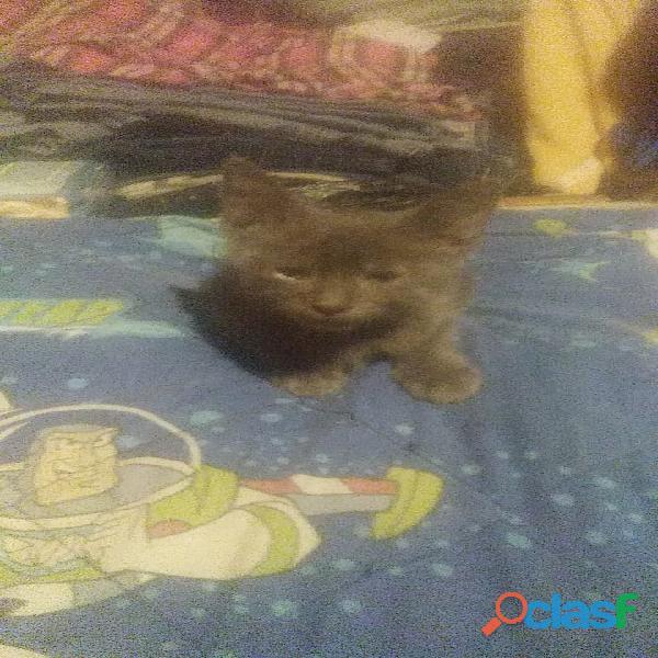 Regalo gatitos 2 meses 1