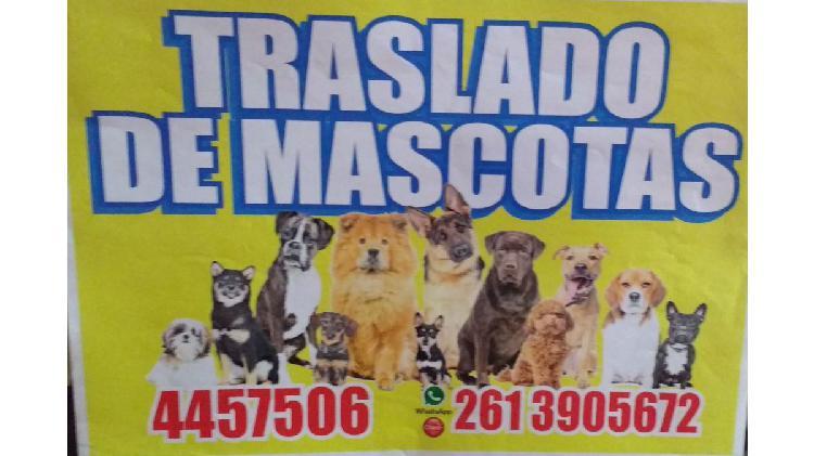 Aaaa !!!!! de mascotas !!!!!!!