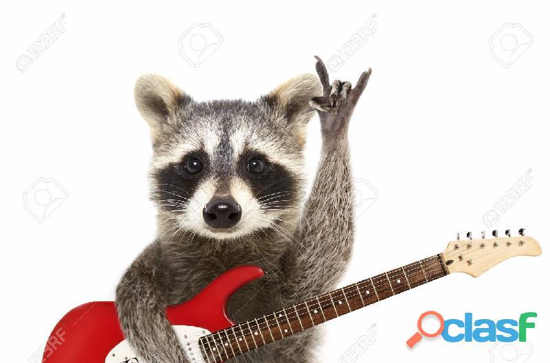 Clases de guitarra y bajo en moron