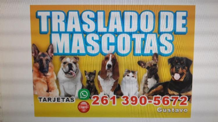 Traslado de mascotas ¡!!!
